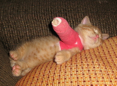 Cute Alert: Animals With Casts