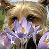 6 Ways to Enjoy Flowers (Safely) With Your Furry Friend