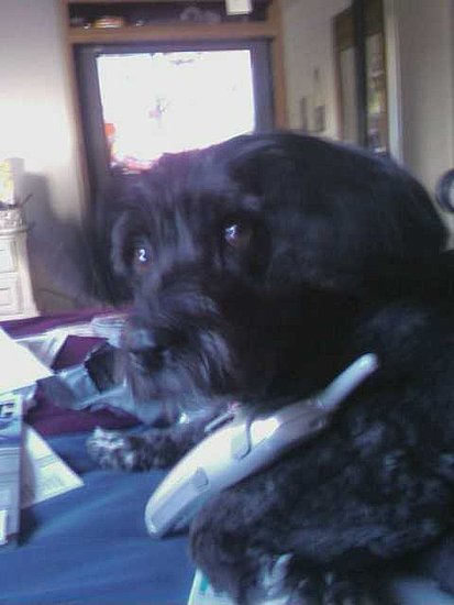 Bonnie is making long-distance calls while watching daytime television...