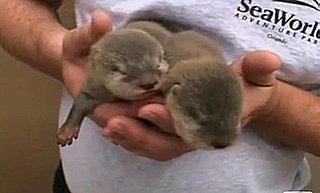 Grab Bag: OMG It's Baby Otters
