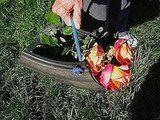 Instructables shows you how to create a trug from an old tire.