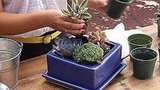Sunset knows that succulents are super trendy. Here's a video instructing you on how to make an outdoor centerpiece with them.