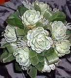 This unusual, beautiful bouquet is constructed from succulents. Source