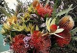 Protea flowers lend a tropical touch to this exuberant bouquet. Source
