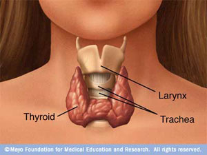 You Asked:  Thyroid Problems and Weight Gain