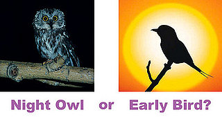 Dear Poll:  Are You a Night Owl or an Early Bird?