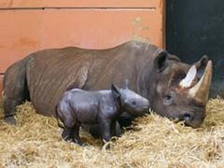 Name the Baby Rhino!