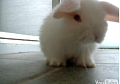 Baby Bunny Grooms Its Cute Self