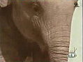 B*tch-Slapped By An Elephant
