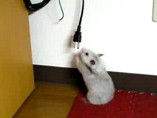 Cute Alert: Frustrated Hamster Wants to Play!
