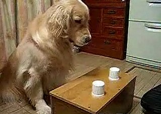 That's a Smart Doggie!