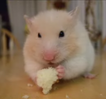 Another Hungry Hamster!
