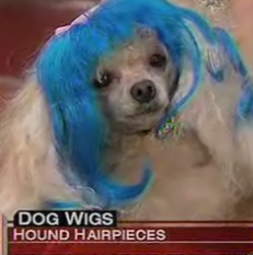 Dog Wigs Make Their TV Debut
