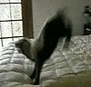 Baby Sheep Jumps on Bed
