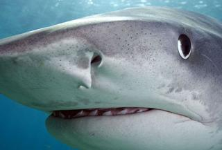 Do You Watch Shark Week on the Discovery Channel?
