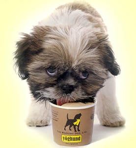 Puppies Want In On The Frozen Yogurt Revival Too