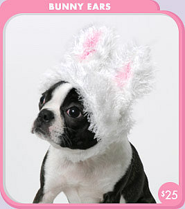Bunny Ears for Dogs