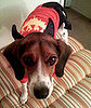 PetSugar&#039;s Halloween Photo Contest Ends Wednesday!