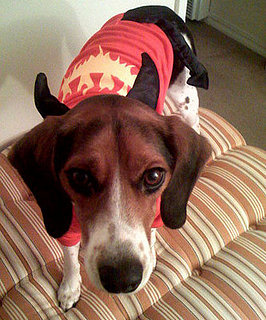 PetSugar's Halloween Photo Contest Ends Wednesday!