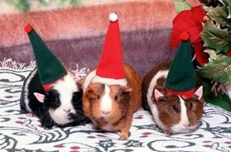 Did your pets get presents for the holidays?