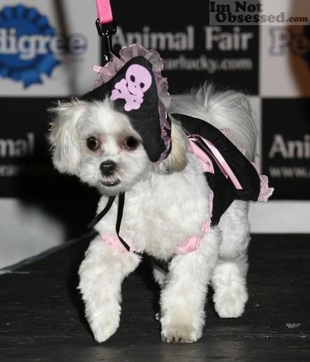 Dog Halloween Costumes!
