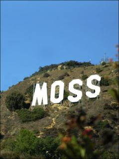 This Just In: Moss Store Opens in Los Angeles