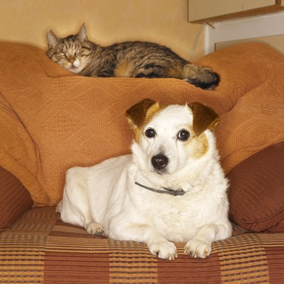 Pet Beds For Modern Interiors
