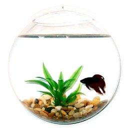 Target : Wall Mount Fishbowl - Clear