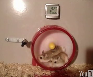 Go Speed Hamster!