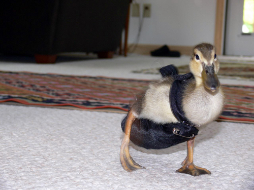 Product of the Day: Duck Diapers