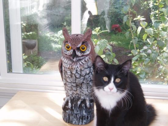 owl_and_Garbo.preview