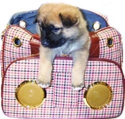 Pet Beat Generation Bag Trumps Non-Pet Bag